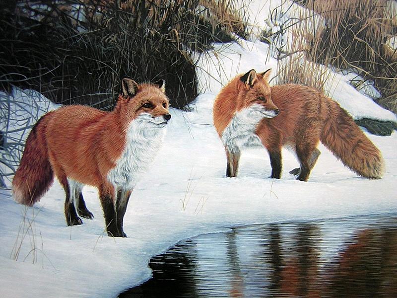Пазл Собирать пазлы онлайн - Лисы на берегу реки