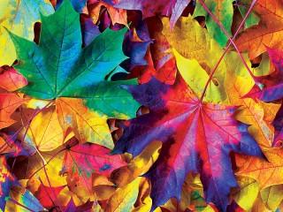 Собирать пазл Листья онлайн