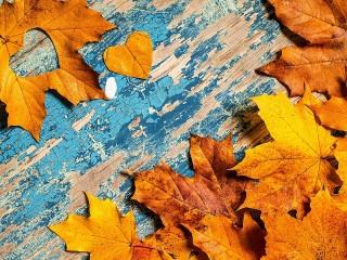 Собирать пазл Листья на доске онлайн