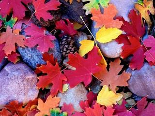 Собирать пазл Листья на камнях онлайн