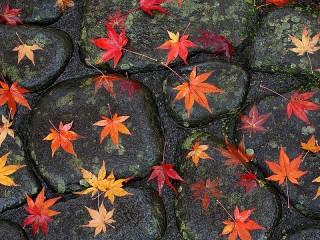 Собирать пазл Листья на мостовой онлайн