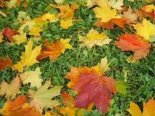 Собирать пазл Листья на траве онлайн