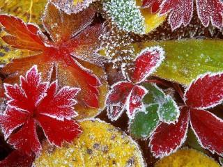 Собирать пазл Осенние листья в инее онлайн