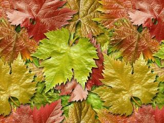 Собирать пазл Листья жёлтые онлайн