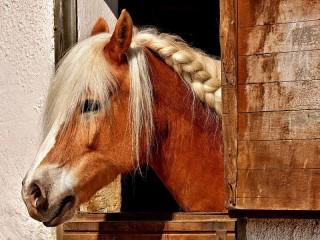 Собирать пазл Лошадь онлайн