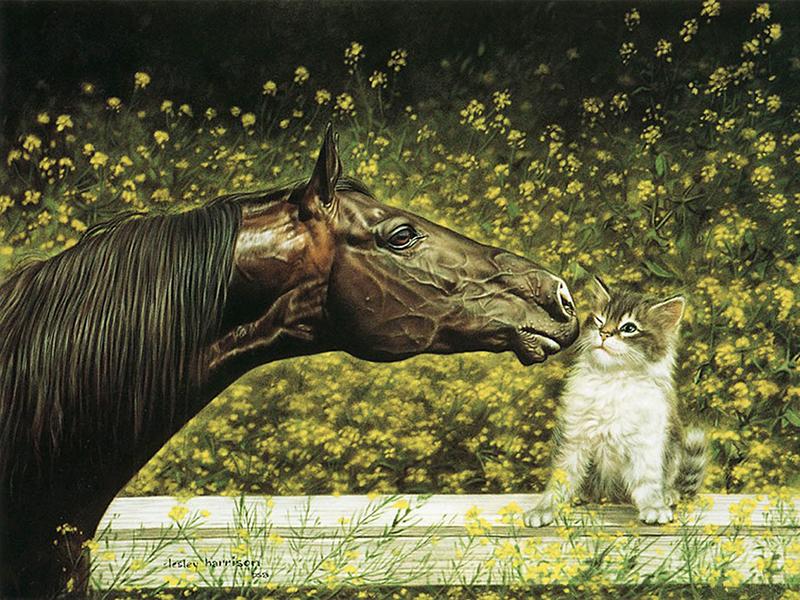 Пазл Собирать пазлы онлайн - Лошадь и котенок