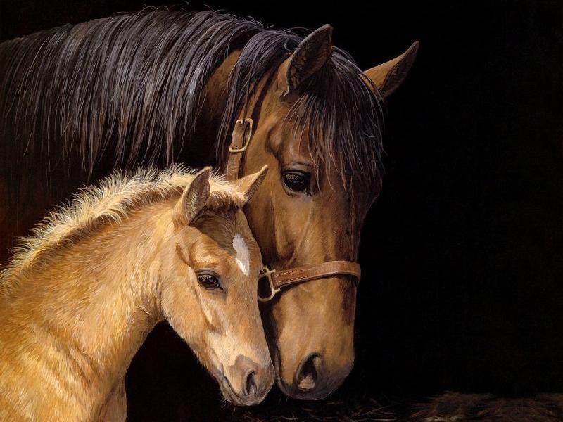 Пазл Собирать пазлы онлайн - Лошадь и жеребенок