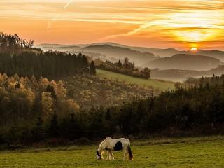 Собирать пазл Лошадь на полонине онлайн