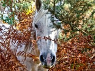 Собирать пазл Лошадь в кустах онлайн
