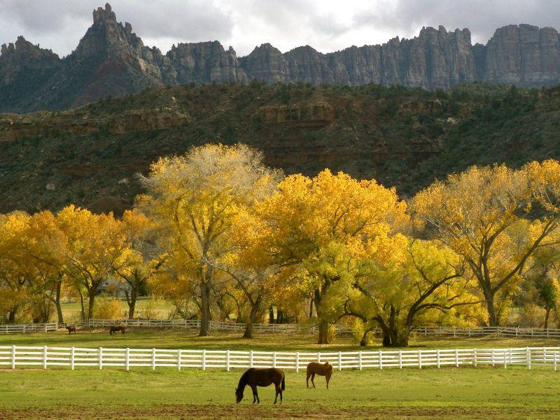 Пазл Собирать пазлы онлайн - Лошади на пастбище