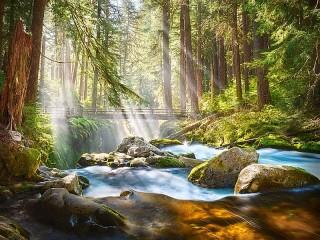 Собирать пазл Лучи в лесу онлайн