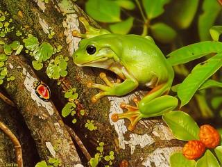Собирать пазл Лягушка и жук онлайн