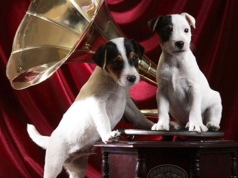 Пазл Собирать пазлы онлайн - Любители музыки