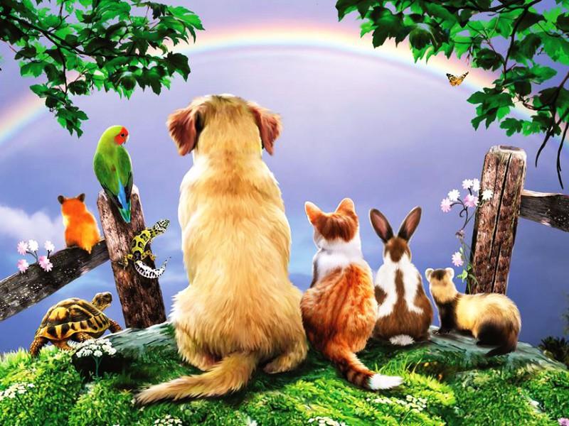 Пазл Собирать пазлы онлайн - Любуемся радугой