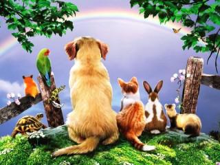 Собирать пазл Любуемся радугой онлайн