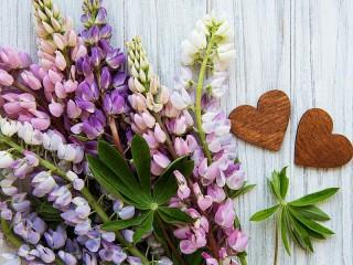 Собирать пазл Люпины и сердечки онлайн
