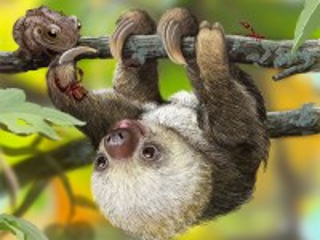 Собирать пазл Маленький ленивец онлайн