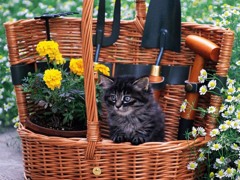 Пазл Собирать пазлы онлайн - Маленький садовник