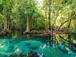 Собирать пазл Мангровый лес онлайн