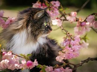 Собирать пазл Мартовский кот онлайн