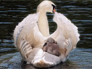 Собирать пазл Материнство онлайн