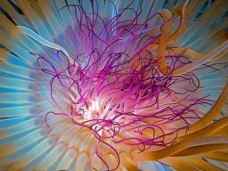 Собирать пазл Медуза онлайн