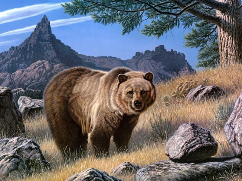Пазл Собирать пазлы онлайн - Медведь гризли