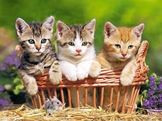 Собирать пазл Милая троица онлайн
