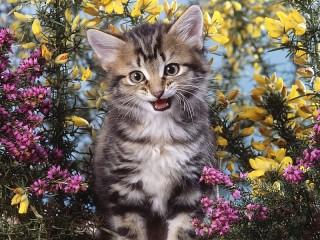 Собирать пазл Милота от кота онлайн