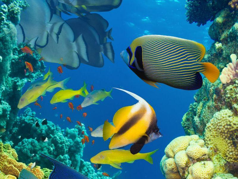 Пазл Собирать пазлы онлайн - Мир под водой