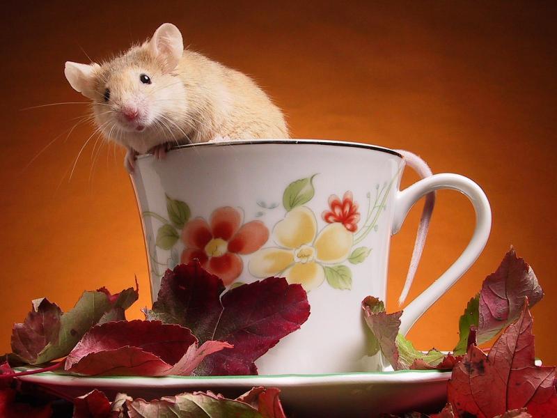 Пазл Собирать пазлы онлайн - Мышь и чай