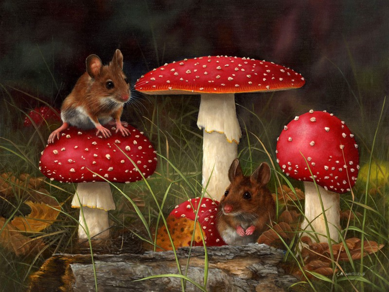 Пазл Собирать пазлы онлайн - Мыши и мухоморы