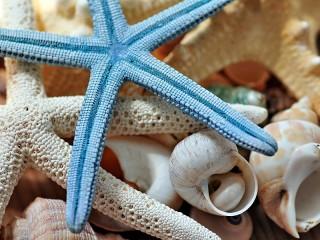 Собирать пазл Морская звезда онлайн