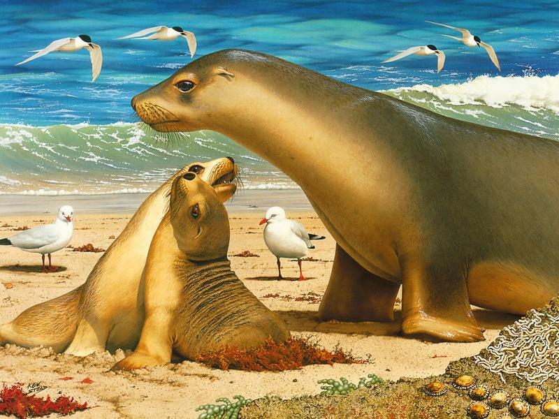 Пазл Собирать пазлы онлайн - Морские львы