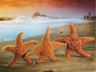 Собирать пазл Морские звезды онлайн