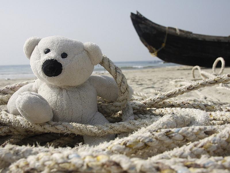 Пазл Собирать пазлы онлайн - Морской медведь