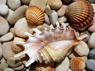 Собирать пазл Морской мир онлайн