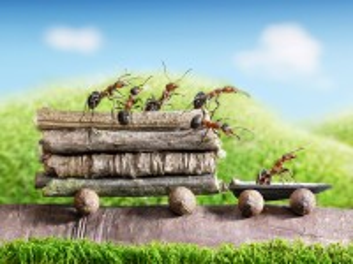 Собирать пазл Муравьи-трудяги онлайн