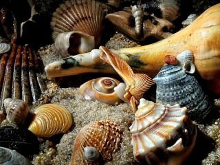 Собирать пазл На морском берегу онлайн