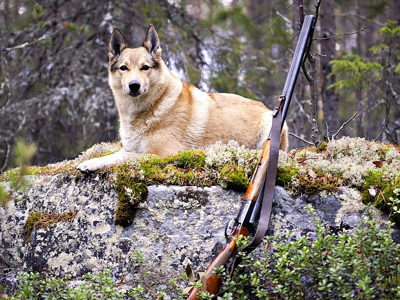 Пазл Собирать пазлы онлайн - На охоте