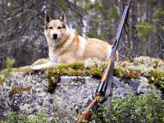 Собирать пазл На охоте онлайн