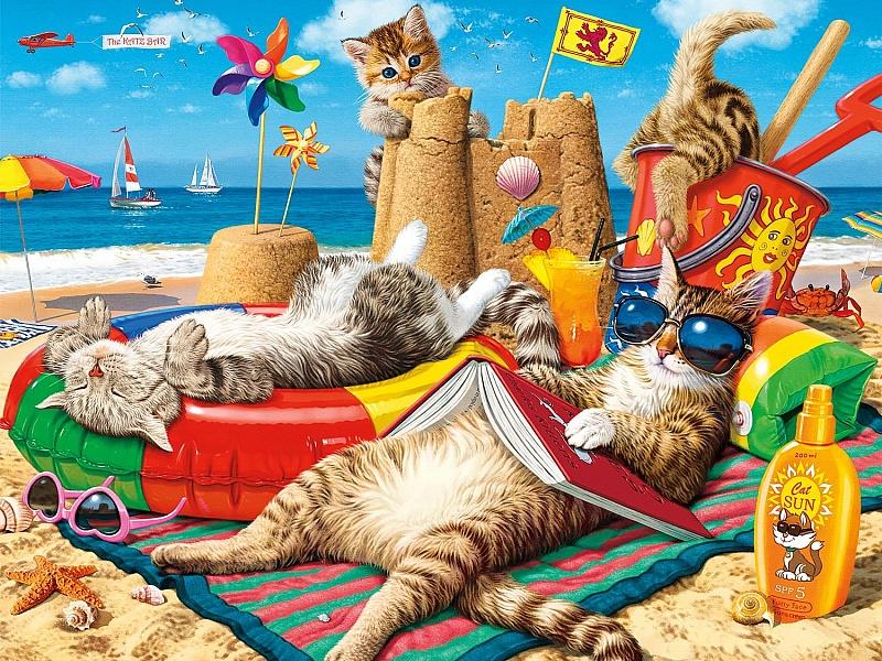 Смешные картинки кошки на море