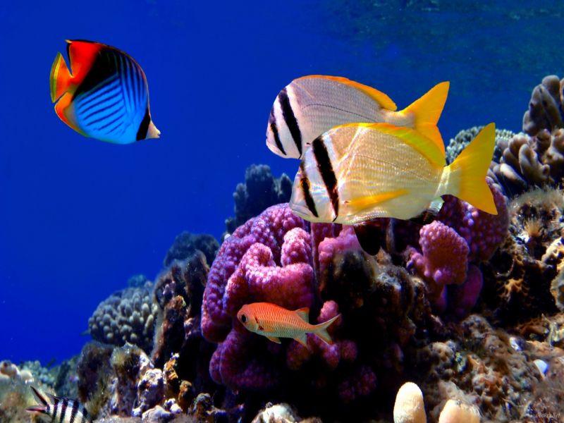 Пазл Собирать пазлы онлайн - На рифе