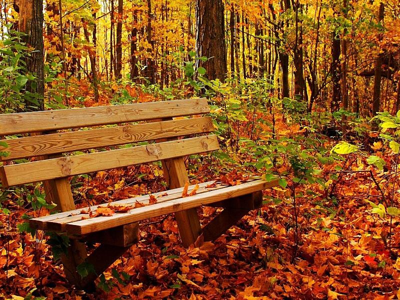 Пазл Собирать пазлы онлайн - Наедине с осенью