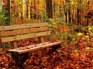 Собирать пазл Наедине с осенью онлайн