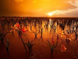 Собирать пазл Намибия - дождь онлайн