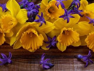 Собирать пазл Нарциссы и гиацинт онлайн