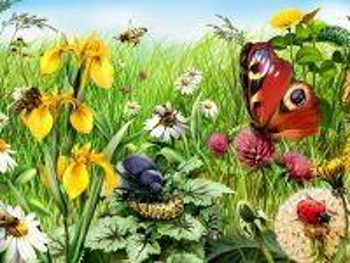 Собирать пазл Насекомые и цветы онлайн