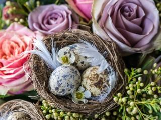 Собирать пазл Натюрморт с гнездом онлайн