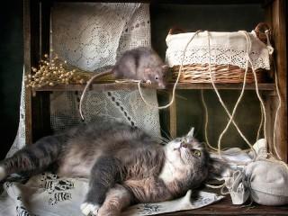 Собирать пазл Не будите кошку онлайн